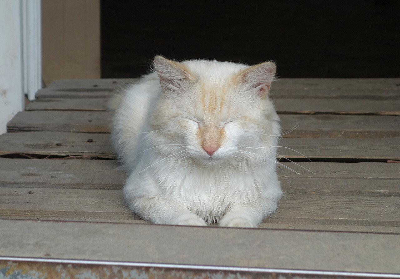 кот, Нижние Вязовые