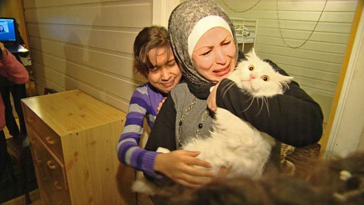 Картинки по запросу Потерявшийся кот вернулся в семью иракских беженцев, преодолев полмира