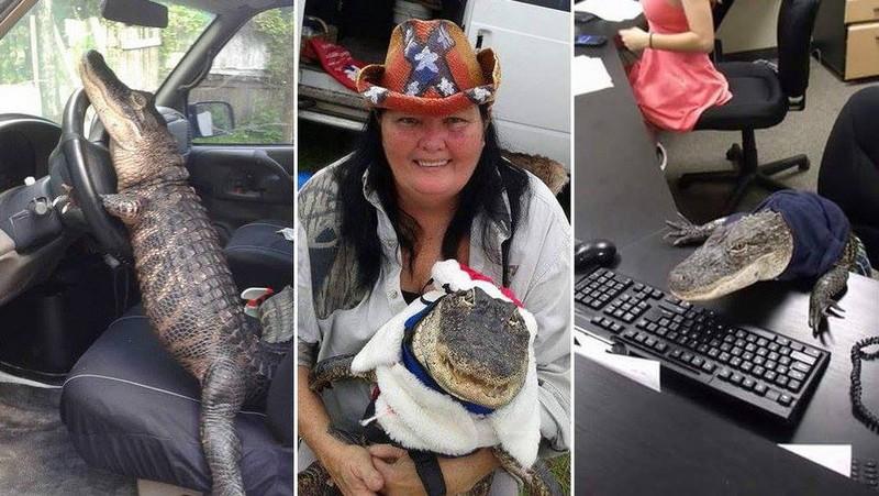 Байкерша из США усыновила аллигатора