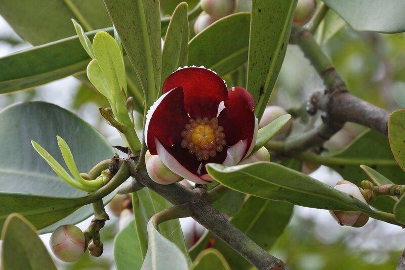 Неизвестный цветок на дереве 2.