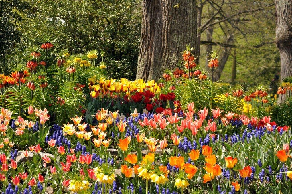 Germany_Parks_Tulips_454757.jpg