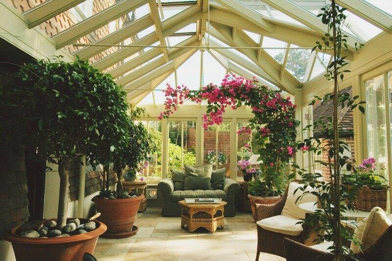 Как выращивать дома самые редкие растения