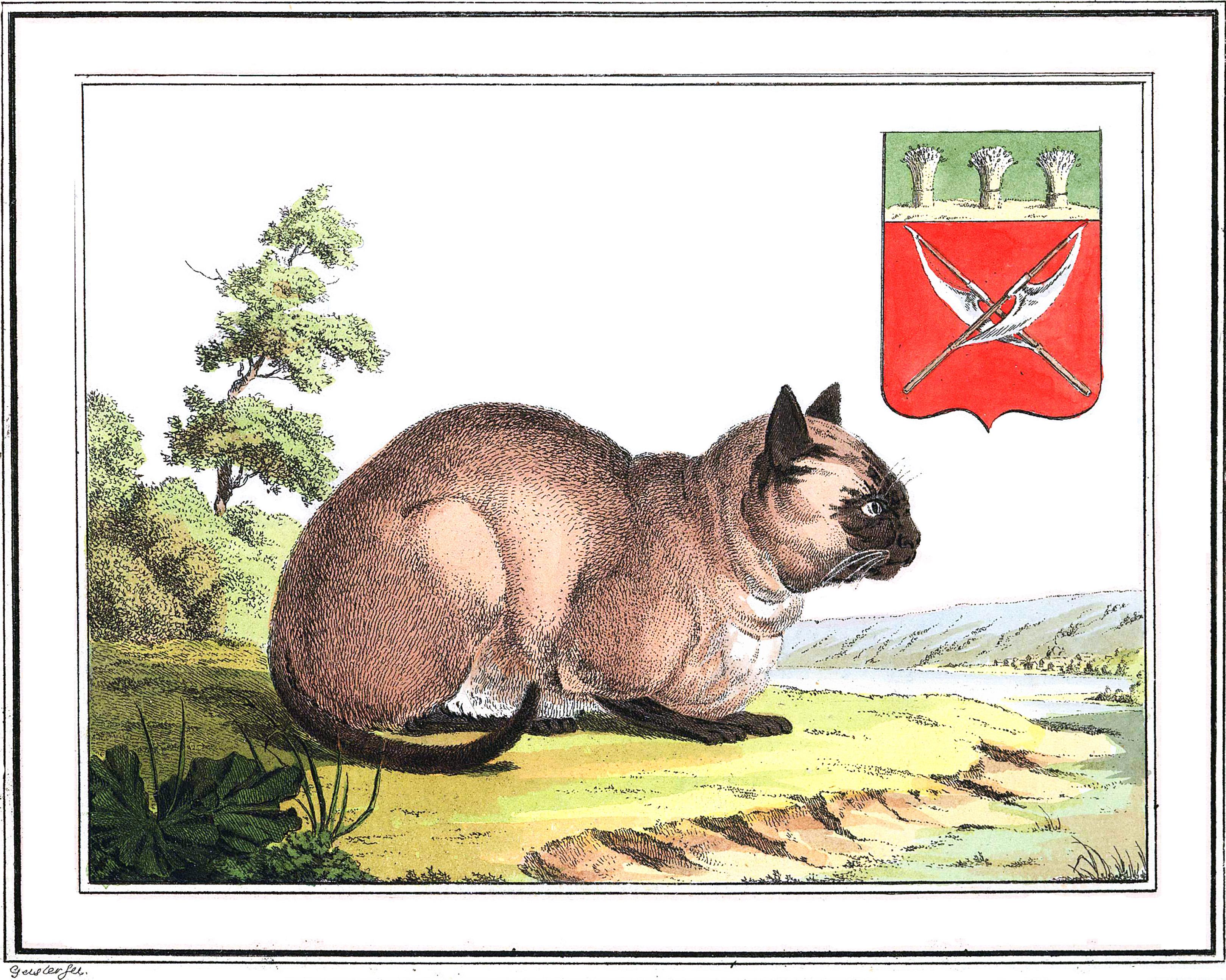 1. Домашняя кошка в деревне мокшан — этнической группы мордвы. А также герб, изображающий мокшанские алебарды.