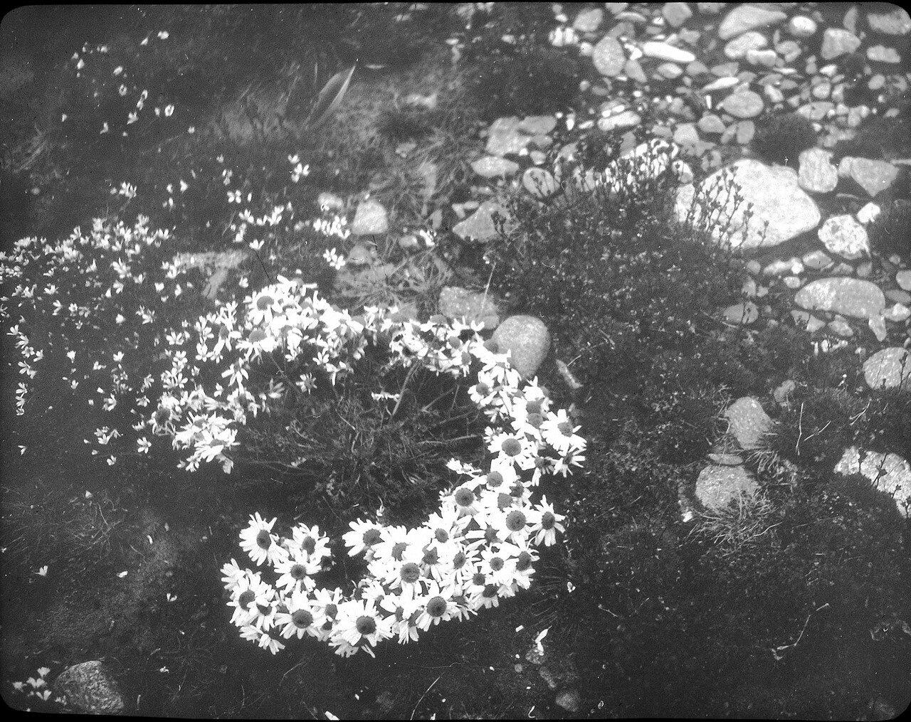 1937. Новая Земля. Берег залива Митюшина