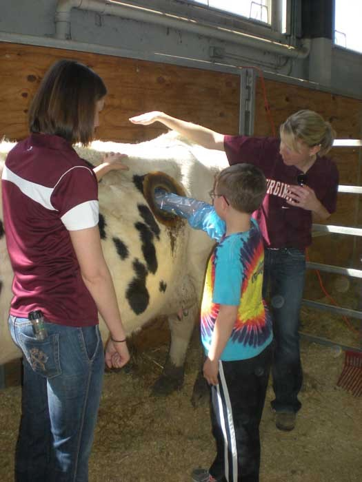 Зачем у коровы дыра в боку ?
