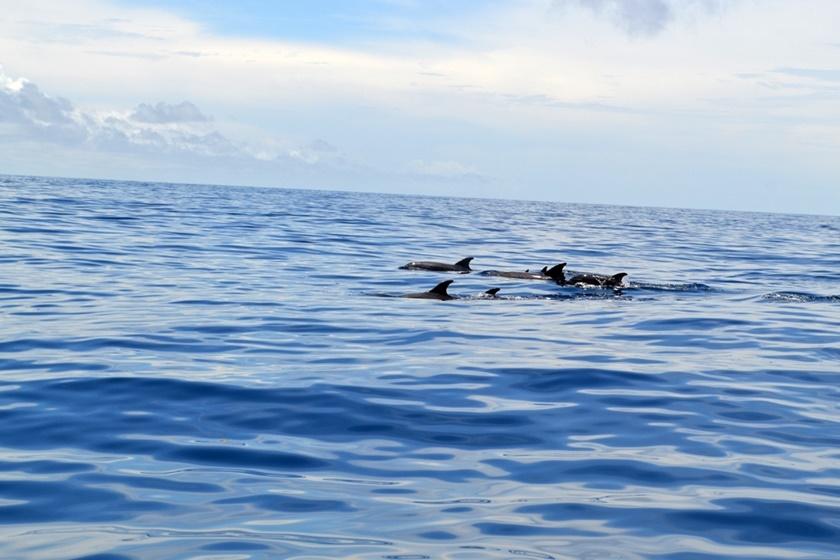 Дельфины у побережья Венесуэлы. Красивые фотографии 0 141a50 c974391b orig