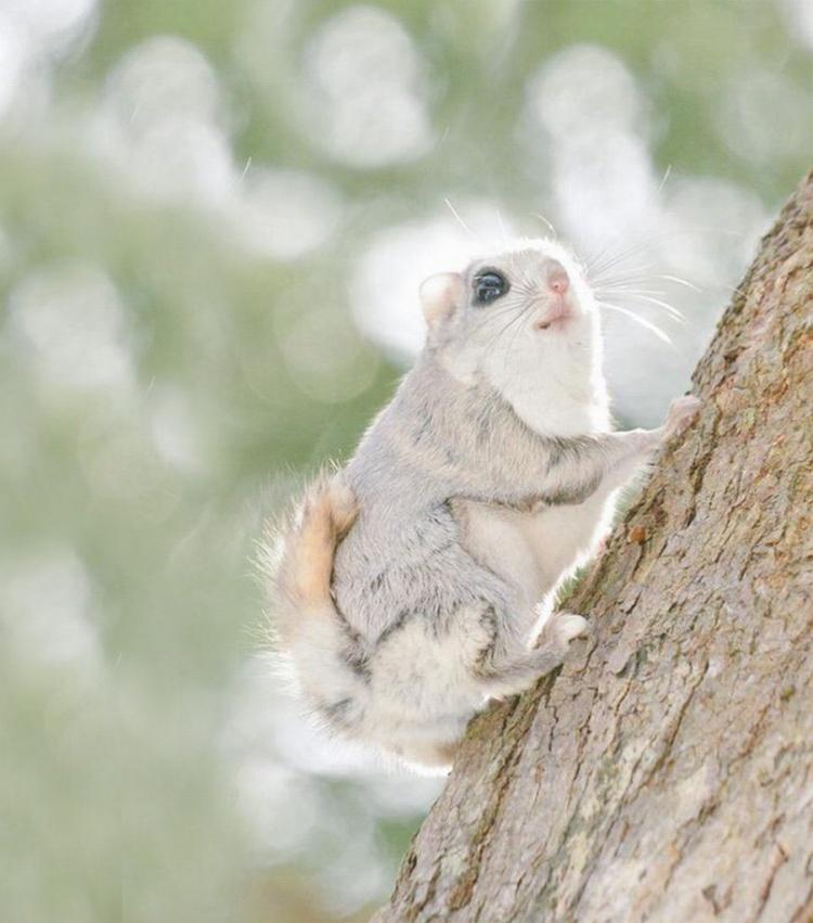 12доказательство того, что белка-летяга— самый милый зверек наземле