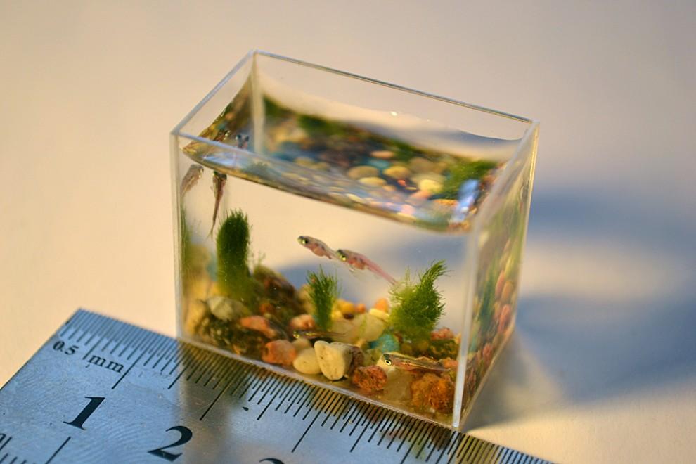 2. Размер наноаквариума, сделанного Анатолием и Станиславом Коненко 12 февраля 2011 года составляет