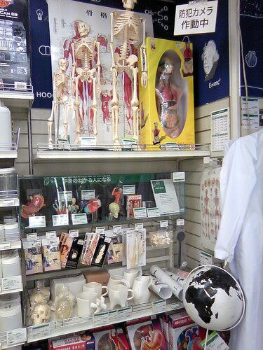 наборы для уроков анатомии