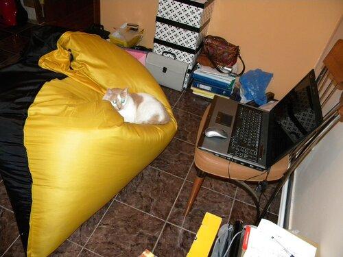 На диванчике у компа..