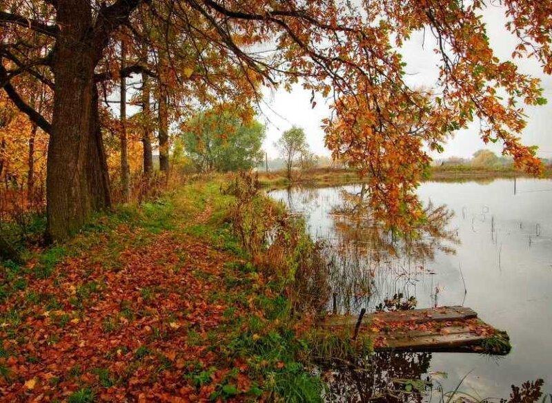 Осень осень ну