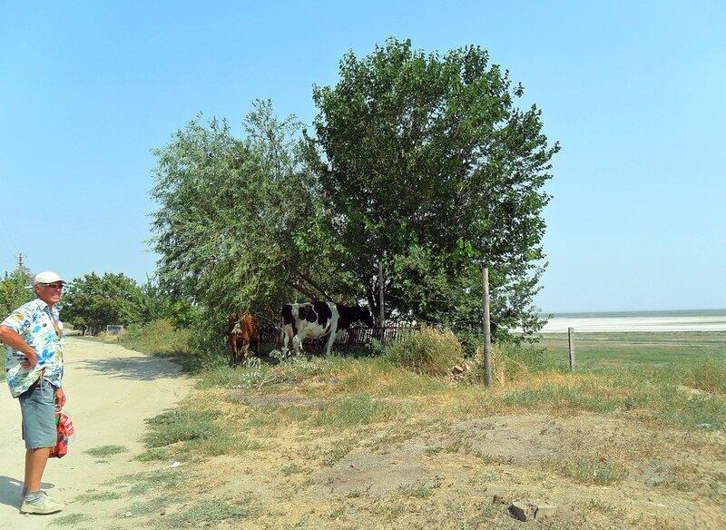 Дорога в Камышеватку от моря...