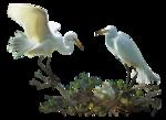 mangrove miracle_dianepierce-sm_1-05~pjs.png