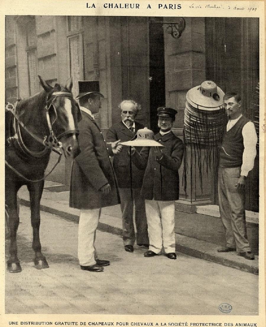 16 Distribution gratuite de chapeaux pour les chevaux, à la Société Protectrice des Animaux, août 1901.jpg