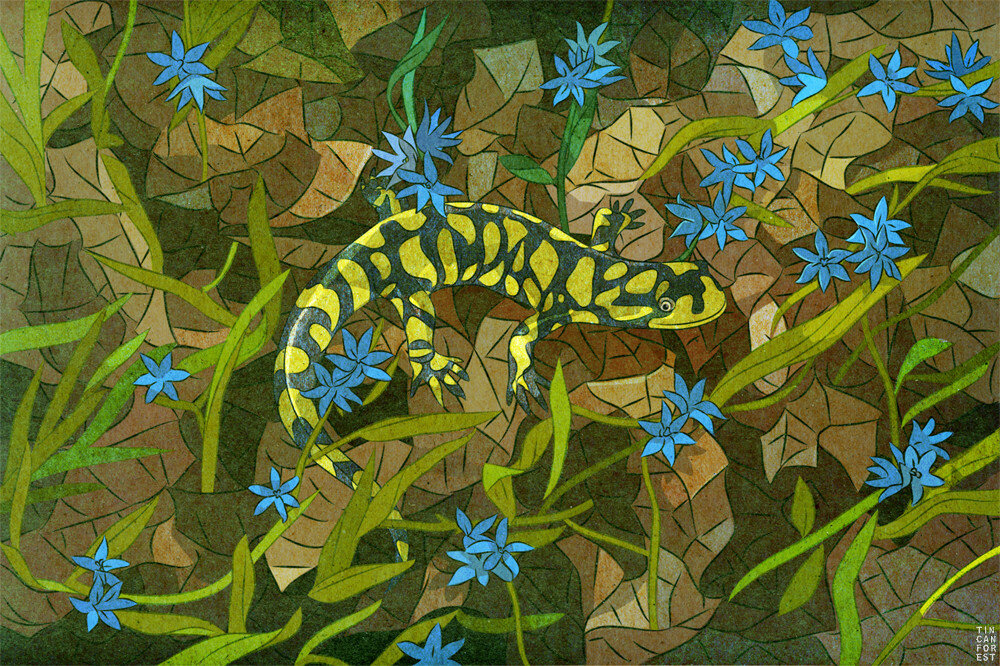 Tiger Salamander by Tin Can Forest