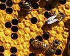 Книга Пчеловодство - подборка литературы ( 255 книг)
