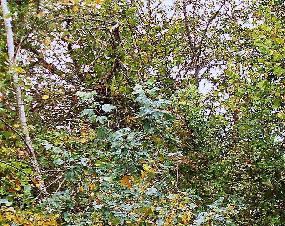 В лесу, под Горячим Ключом, (153).JPG