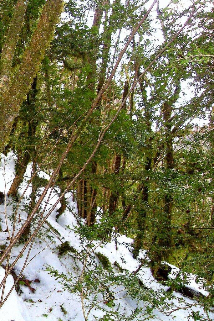 В лесу зимнем, горном... SDC18641.JPG