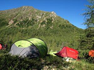 Стайка кешуёв села на склон горы поздним вечером и улетела ранним утром