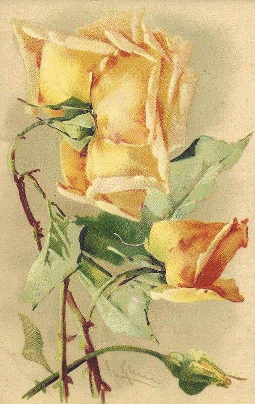 К. Кляйн. 128.  Розы.