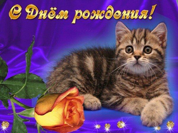 Открытки с днем рождения с кошками анимация 39
