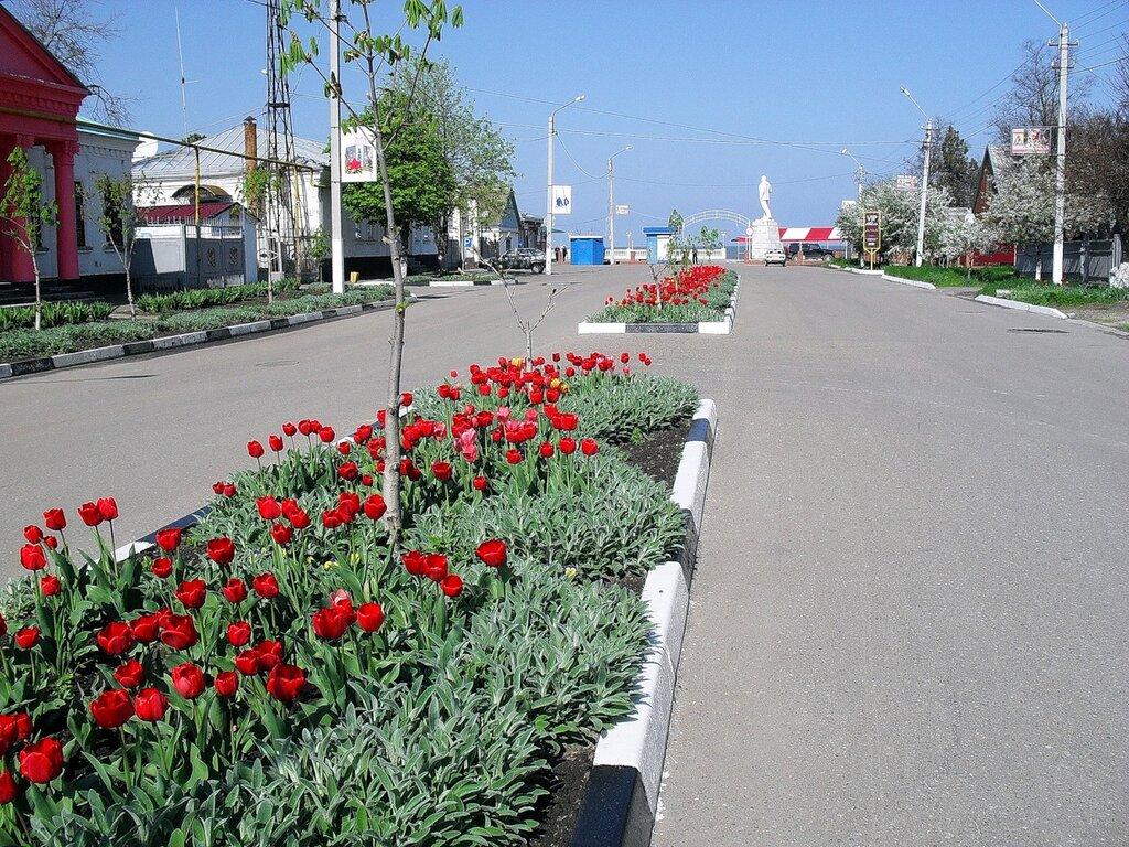 Апрельский тюльпановый рай в Ахтарях.