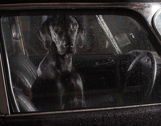 "Martin Usborne ""Молчание собак в машинах"""