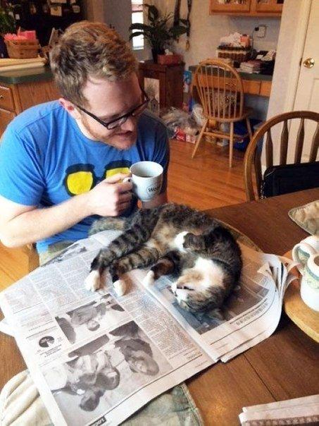 коты мешают человеку читать 4