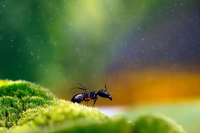 Яркие макрофотографии природы Надав Багим (Nadav Bagim)