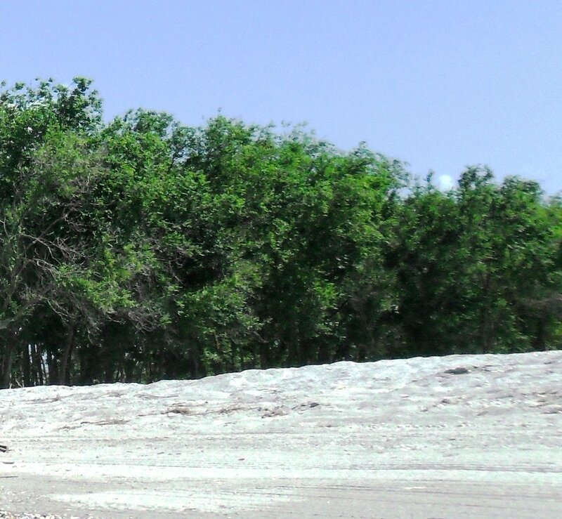 Лес за песчаным холмом ... SAM_8810.JPG