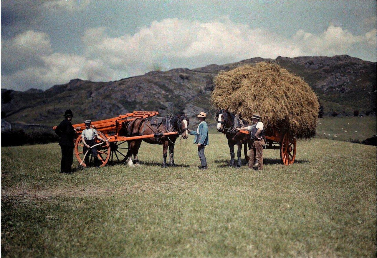Полицейский и фермеры, собирающие сено в Ланкашире