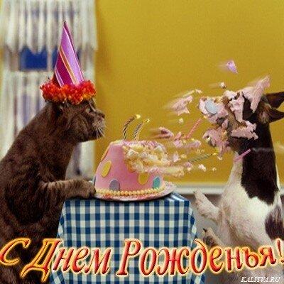 Открытка с днём рождения с котами смешные 132