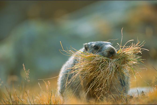 Животные от Stefano Unterthiner