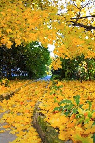 Осень, она не спросит, Осень, она придет...