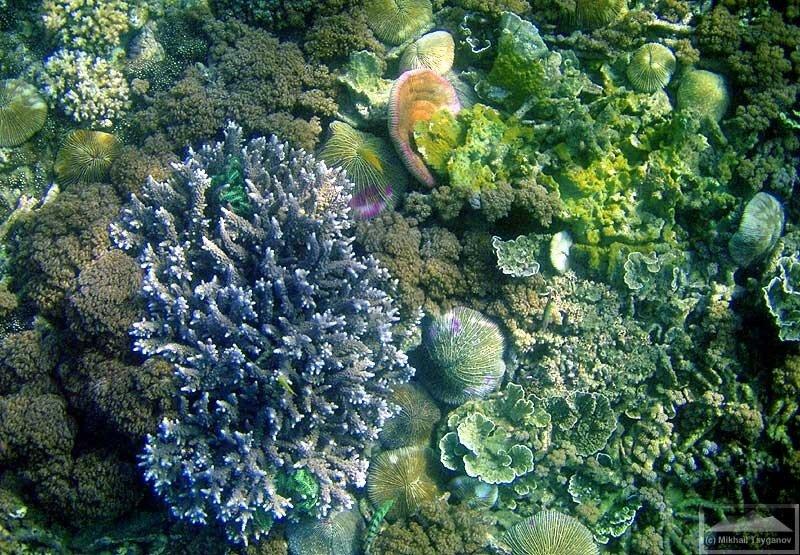 Под водой у Ракаты
