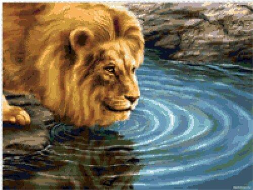 Лев у воды