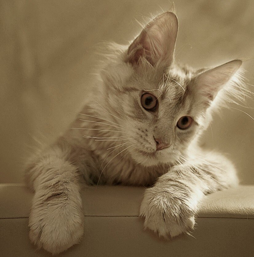 Картинки котов с надписями фото
