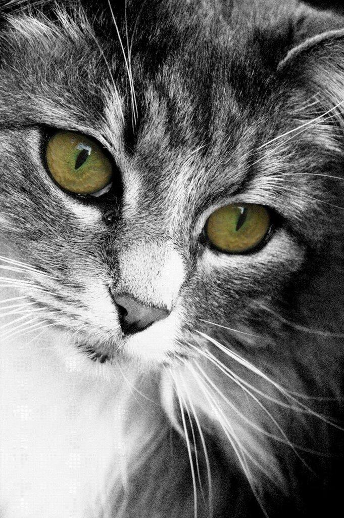 My Cat by Gabroxy