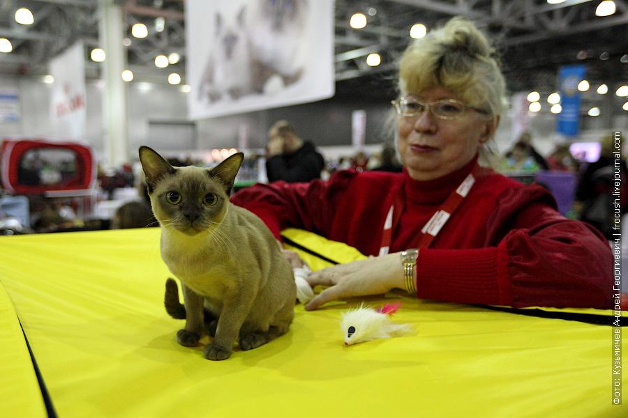 фотографии выставка кошек гран при Royal Canin Бурма