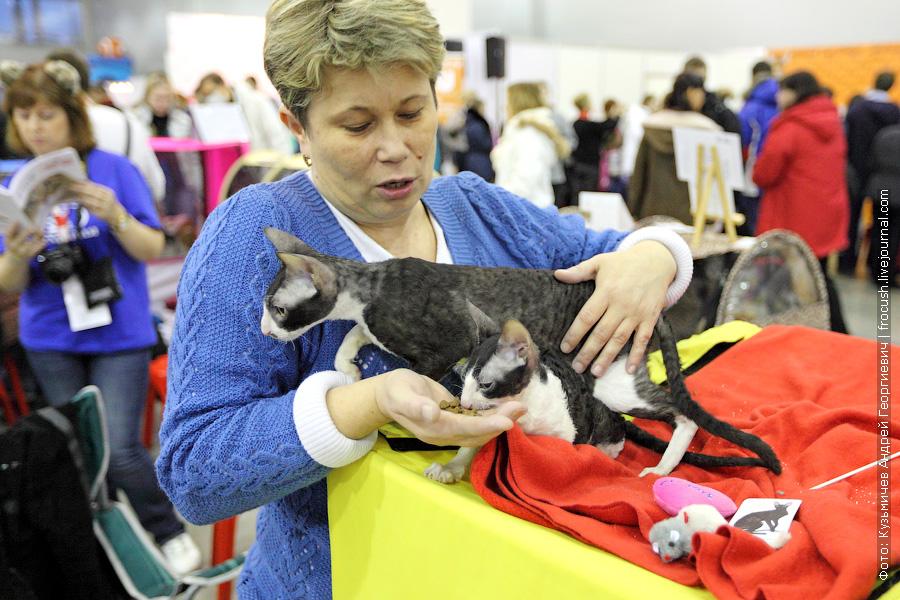 Корниш-рексы фотографии выставка кошек