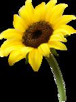 цветы-(273).png