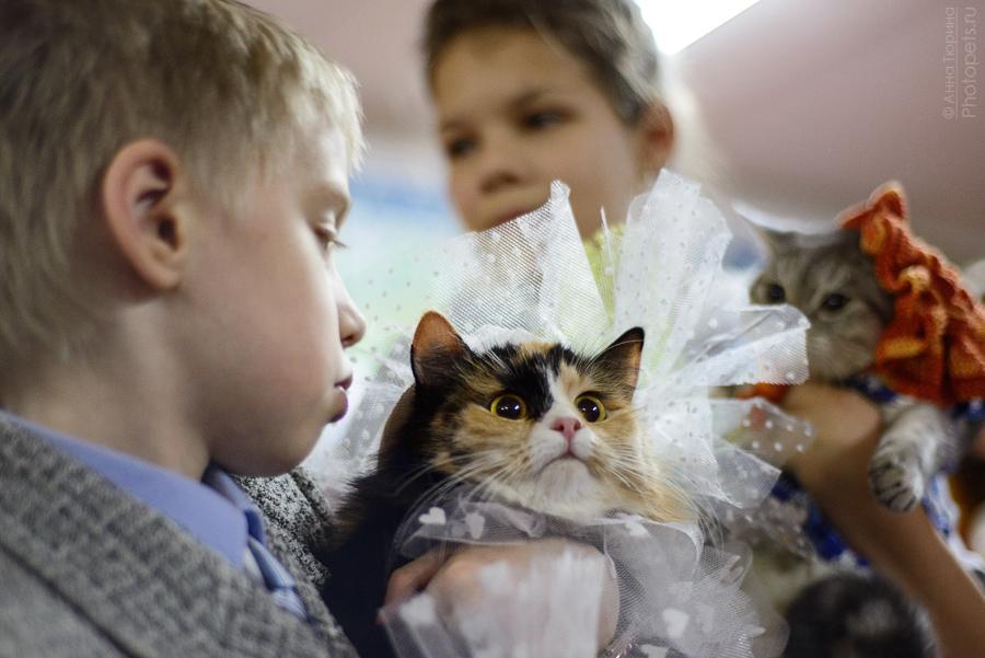шоу кошек зимний вернисаж