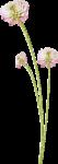 «Dreamin Pink» 0_99b1b_c340329_S