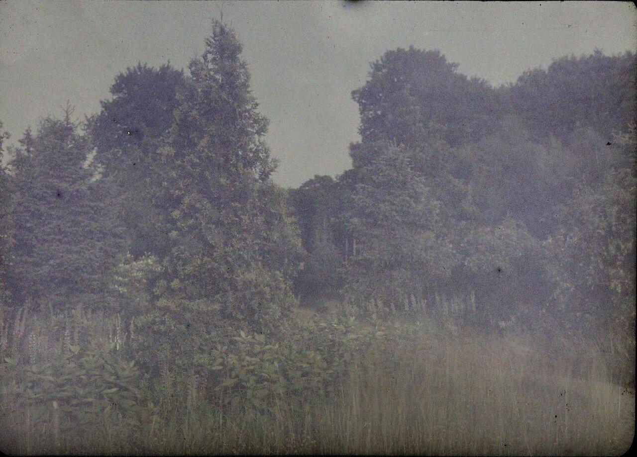 1913. В лесу