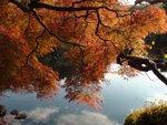 Токийский сад Синдзюку