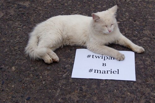 #twiparty в #mariel