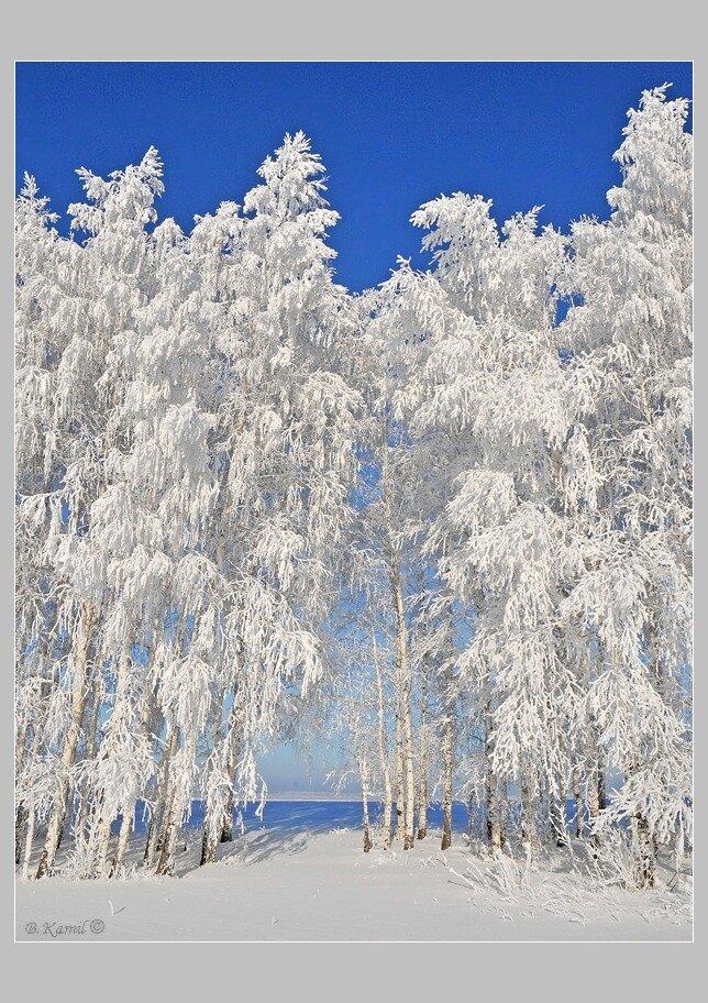 картинка зимнего пейзажа книжного варианта это часто
