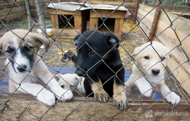 Картинки по запросу приют для животных Сириус