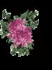 Овальная рамка из роз