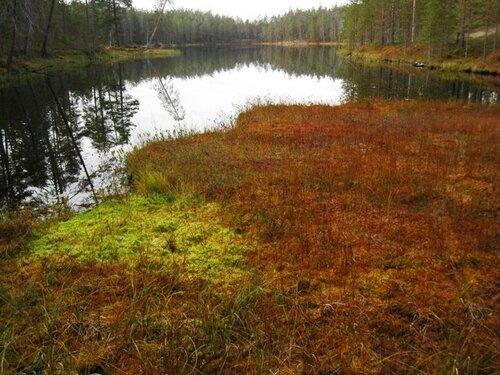 Финские мхи и... ковры